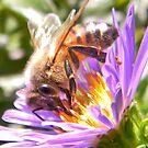 Buzzing Bee by Lady  Dezine
