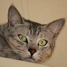 Xmas Cat by Elaine Short