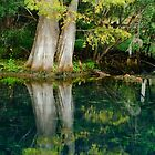 Manatee Reflections of Fall by Robert H Carney