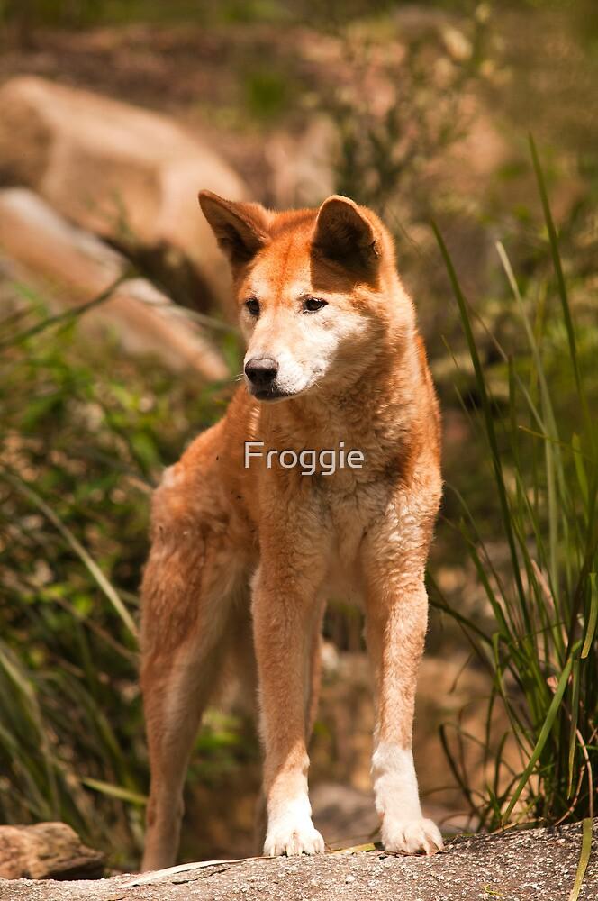 Quot Australian Dingo Quot By Froggie Redbubble