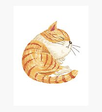 Tabby sleeping Photographic Print