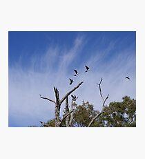 Cormorant - Bird & Animal Sanctuary, Lake Cargelligo Photographic Print