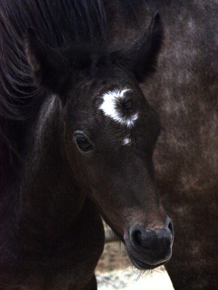 Connemara Pony Foal with amazing markings by ConnemaraPony