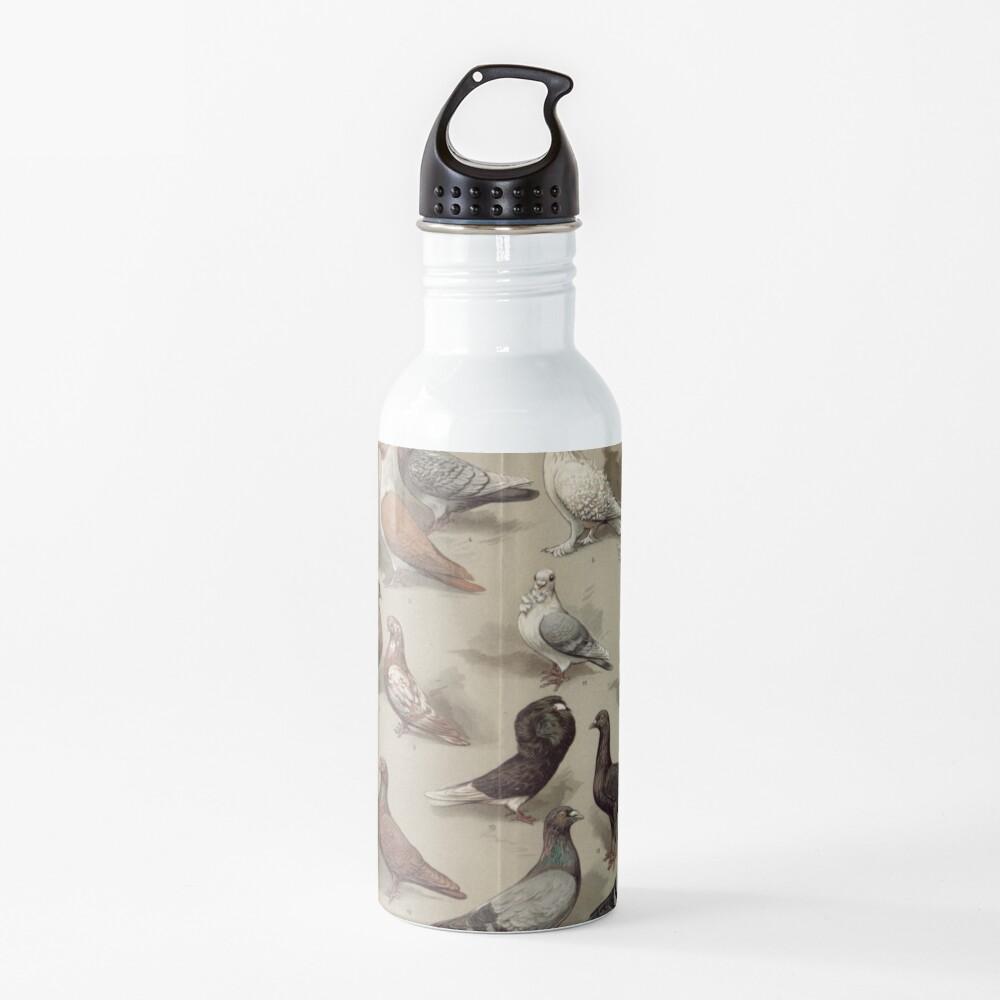 Taubenzucht-Diagramm Trinkflasche