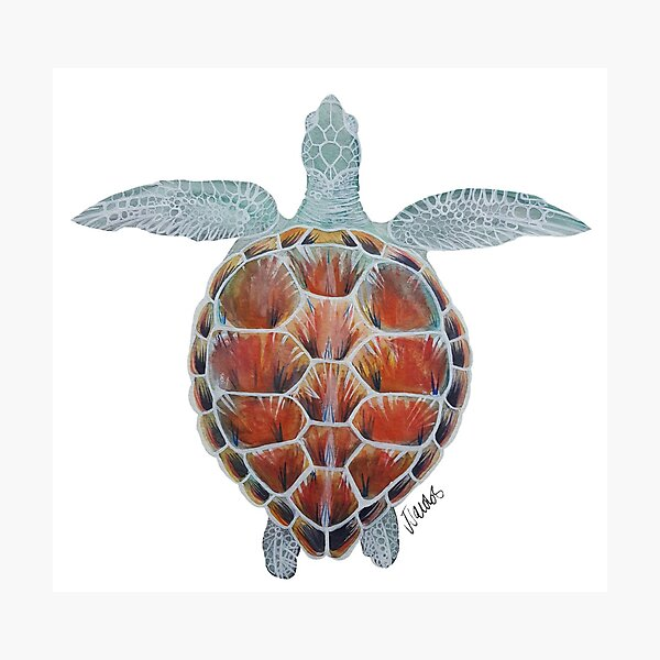 Watercolor Sea Turtle  Photographic Print