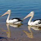 Synchronized Swiming by Robert Abraham