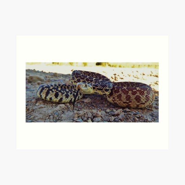 Bullsnake Art Print
