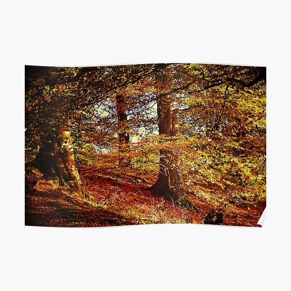 Autumn's Golden Glow. Poster