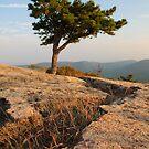 Mountain Peak Sentinel by MikeJagendorf