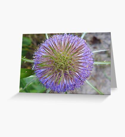 Blooming Teasel Greeting Card