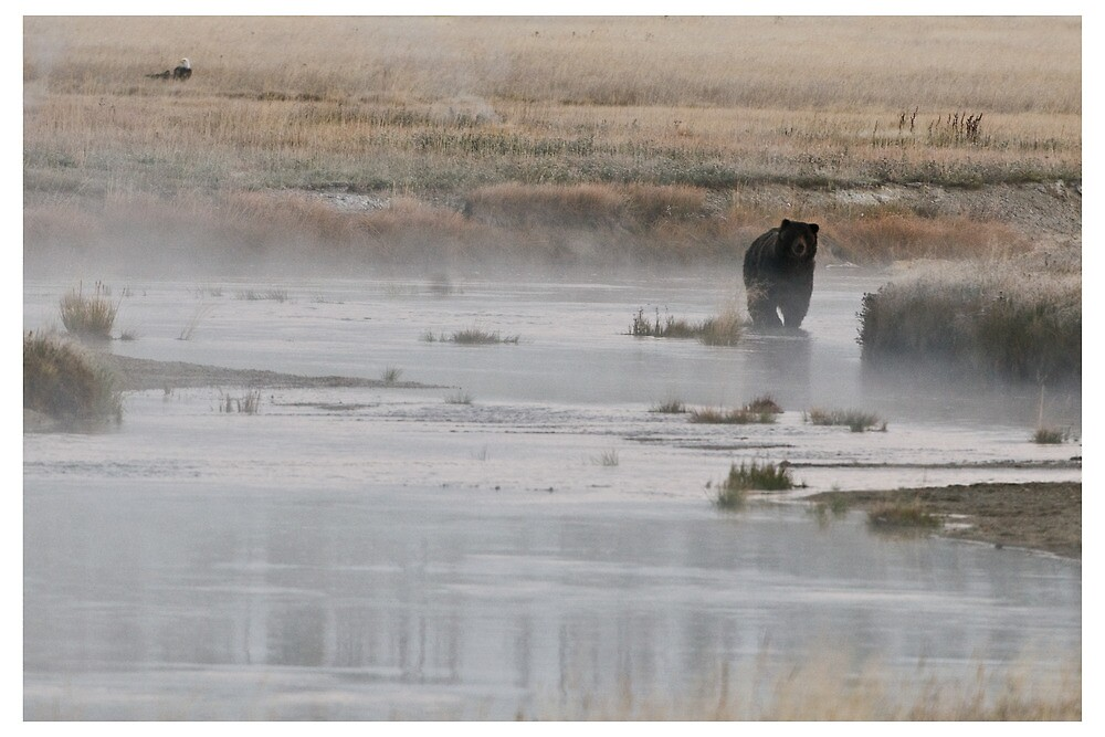 Yellowstone Grizzly - Wyoming USA by Raymond J Barlow