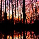 Reflections of Autumn by Terri~Lynn Bealle