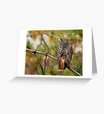 Red-tailed Hawk - Ontario, Canada Greeting Card
