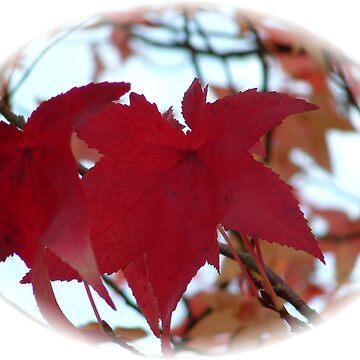 Red Acer Leaf by dizzyg