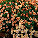 Autumn Blossom by Chris Goodwin