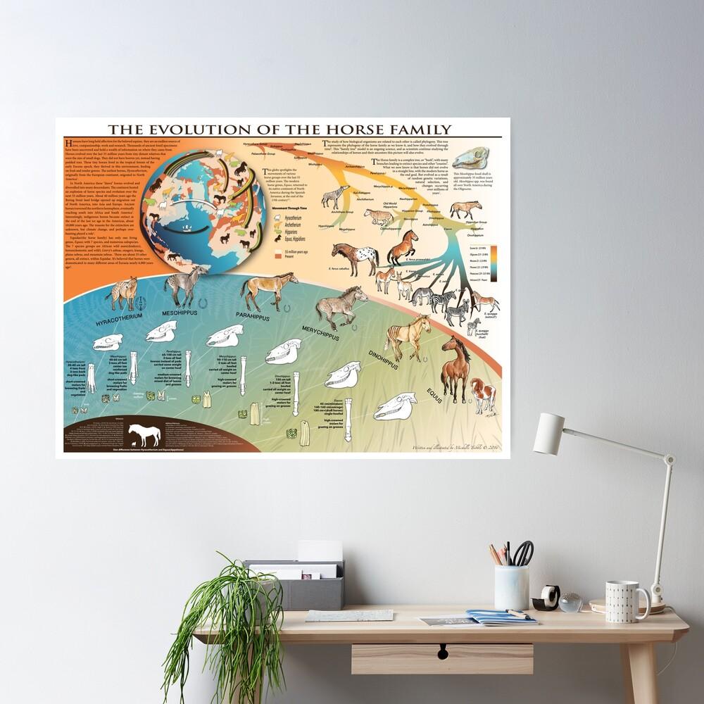Horse Evolution Poster