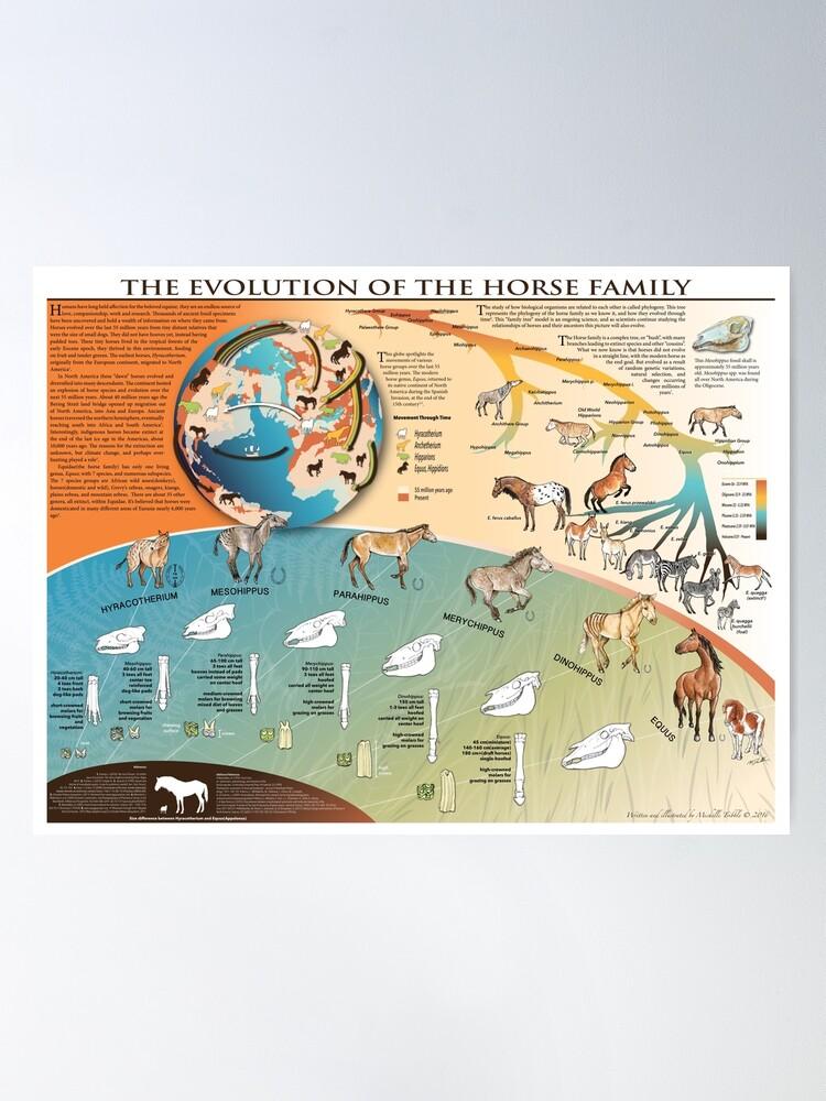 Alternate view of Horse Evolution Poster
