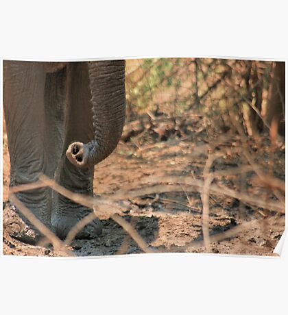 SERIES: UP-CLOSE & PERSONAL, WITH THE ELEPHANT 2 Poster