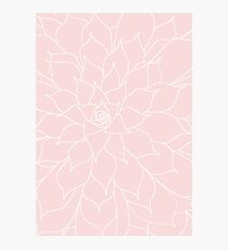 Rose Quartz Succulent Photographic Print