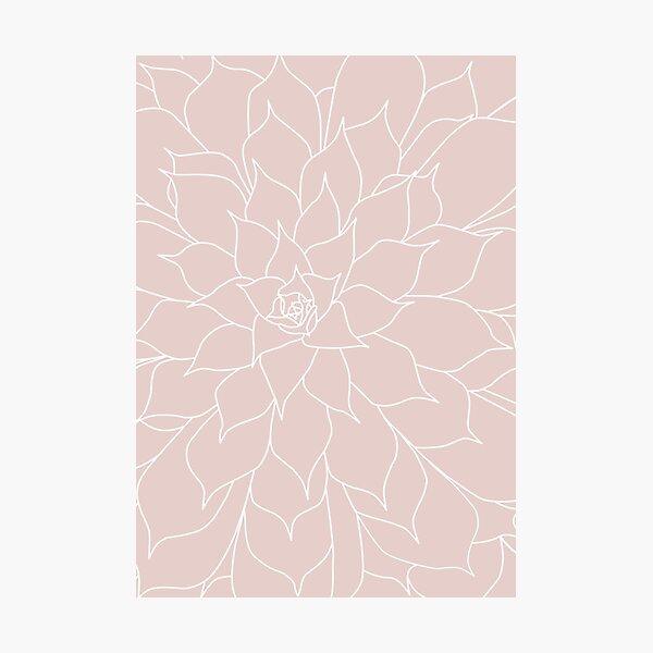 Blush Pink Succulent Photographic Print