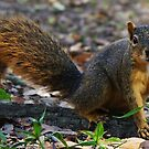 A Squirrel on Another Mission by Alison M
