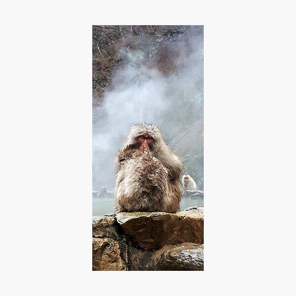 Japanese snow monkey Photographic Print