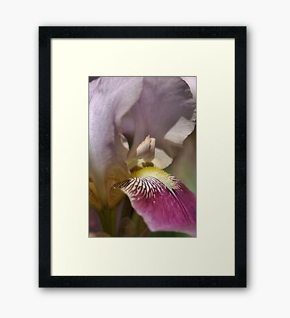 Love of Iris Framed Print