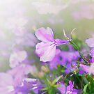 Summer Tenderness by Evgenia Attia