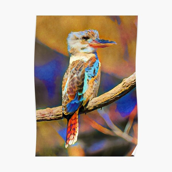Kookaburra Dream | Painting  Poster