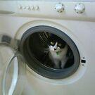 Boo In Washing Machine by Tara Lea