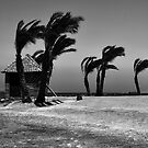 Windy day by Andrey Kudinov