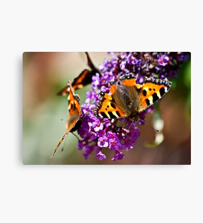 Fly Away Butterfly Canvas Print
