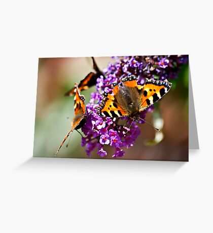 Fly Away Butterfly Greeting Card