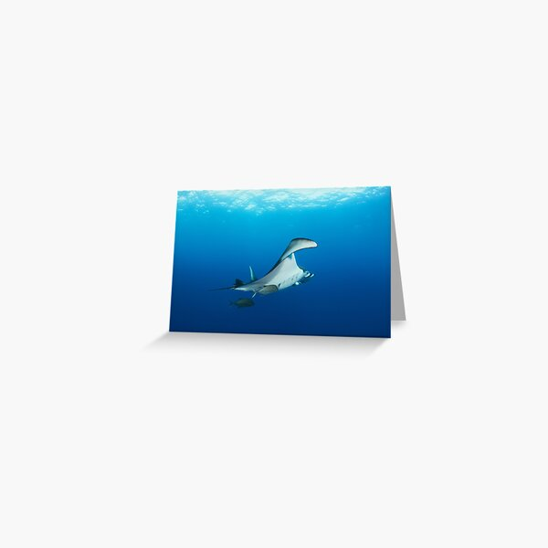 Giant manta ray in the blue Greeting Card