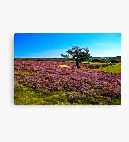 Hawnby Moor #2 Canvas Print