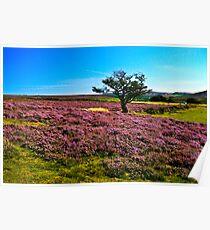 Hawnby Moor #2 Poster