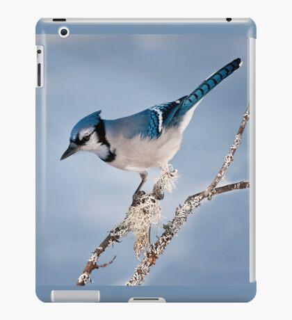 Blue Jay iPad Case/Skin