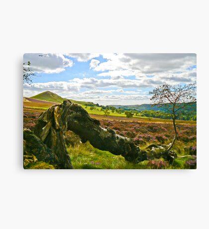 Hawnby Moor #4 Canvas Print