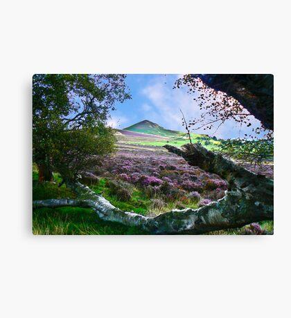 Hawnby Moor #7 Canvas Print