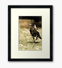 The Scraggly Magpie  Framed Print