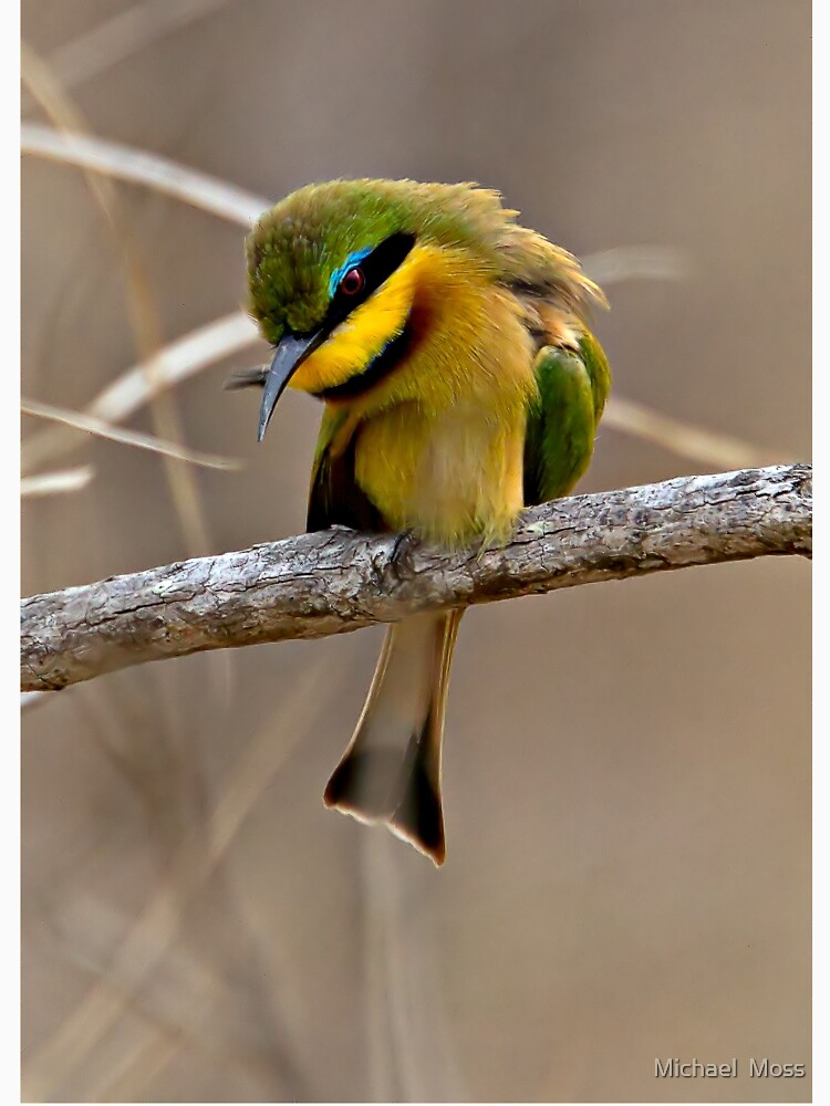 Little Bee Eater by Mytmoss