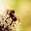 Love the bees! by Astrid Ewing Photography