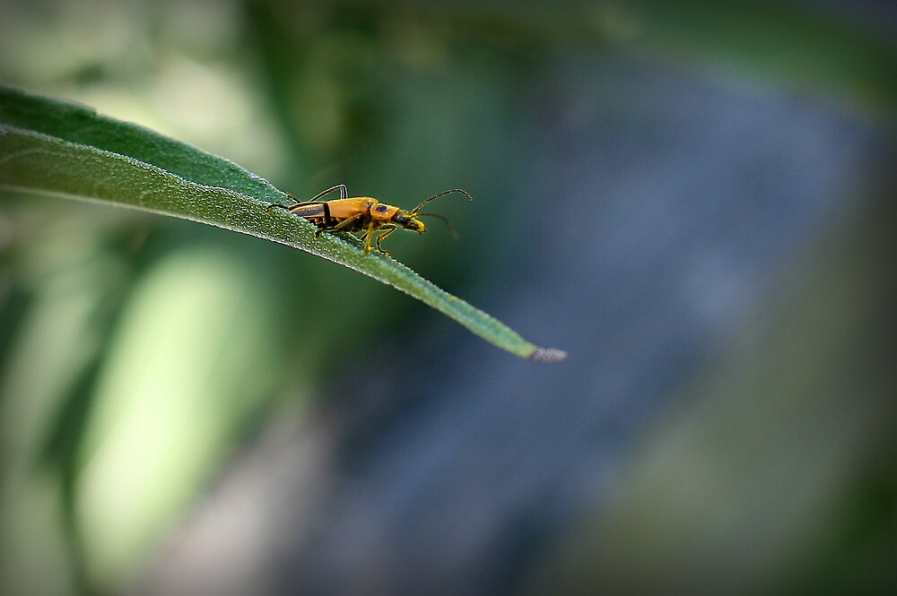 Gold Bug by Kathleen Jones