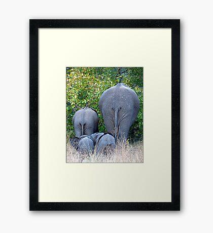 Elephant Roadblock Framed Print