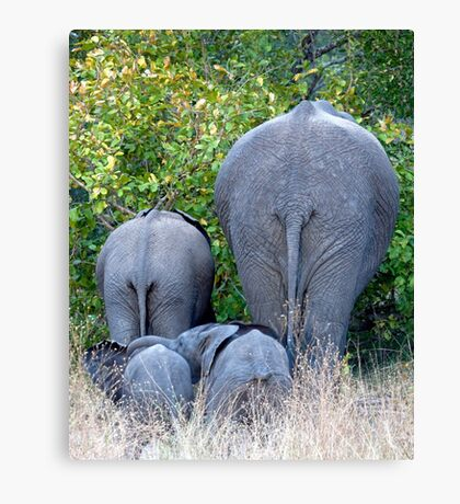 Elephant Roadblock Canvas Print