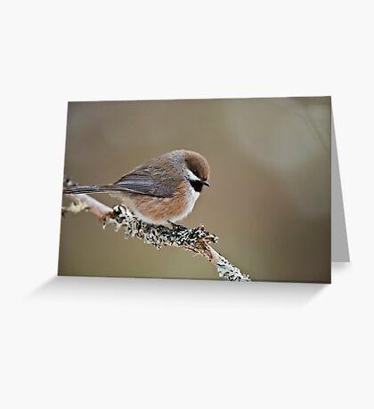 Boreal Chickadee Greeting Card