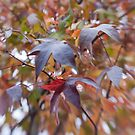 Leaves of Many Colors by Lynn Wiles