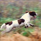 Aye aye sir! full speed ahead by Alan Mattison