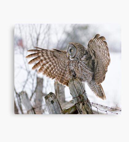 Great Grey Owl - Dunrobin, Ontario Metal Print
