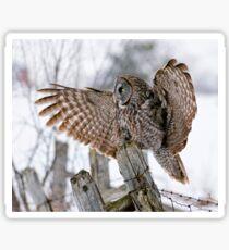 Great Grey Owl - Dunrobin, Ontario Sticker